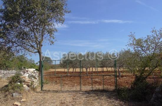 Istra-Peroj plot 3200m2 with olive