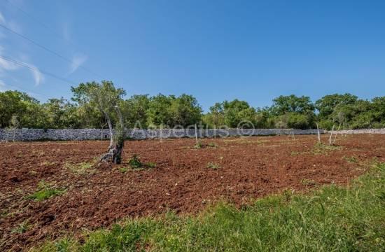 Urejen oljčni nasad, 1204 m2, Vodnjan, Peroj