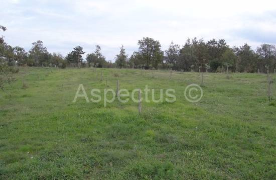 Istra-Hrboki zazidljivo zemljišče 2000m2